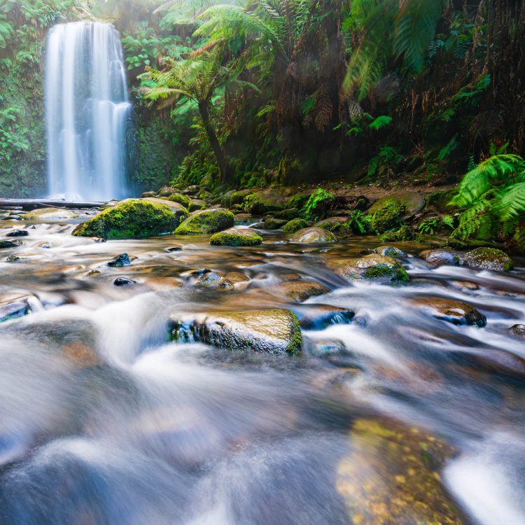 A waterfall in the Otway's along the Great Ocean Road