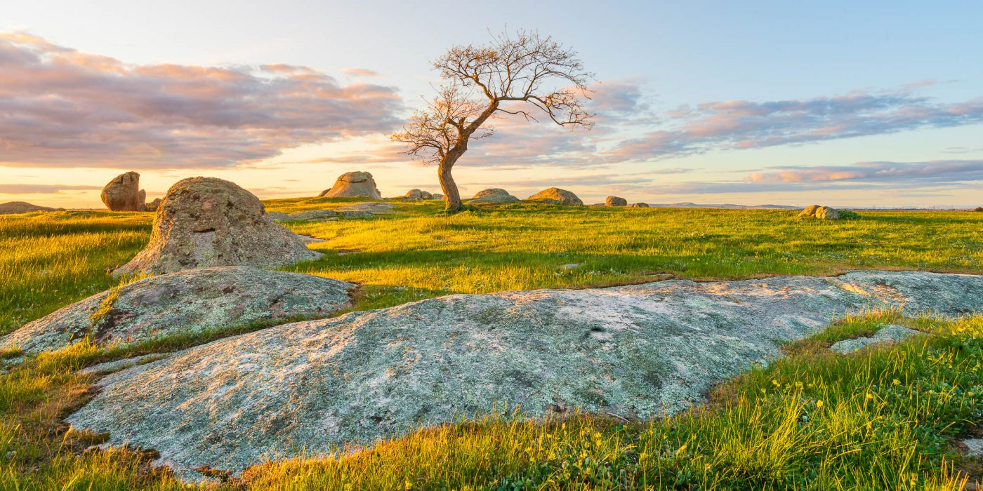 Landscape photograph of a lone tree at Dog's Rocks